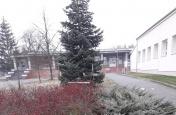 Poničená výzdoba vánočního stromu